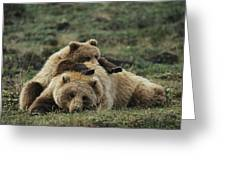 A Grizzly Bear Cub Stretches Greeting Card