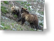 A Grizzly Moment Greeting Card