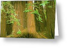 A Group Giant Redwood Trees In Muir Woods,california. Greeting Card