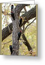 A Group Of Acorn Woodpeckers In A Tree Greeting Card
