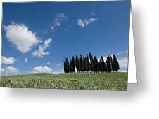 A Group Of Cypress Trees Dot A Tuscan Greeting Card