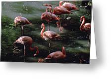 A Group Of Flamingos At The Folsom Greeting Card