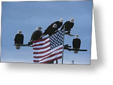 A Group Of Northern American Bald Greeting Card