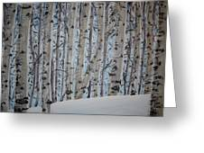 A Grove Of Aspens Greeting Card