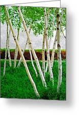 A Grove Of Birches 1 Greeting Card