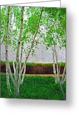 A Grove Of Birches 2 Greeting Card