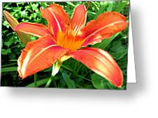 A Grrreat Tiger Lily Greeting Card