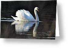 A Happy Swan Greeting Card