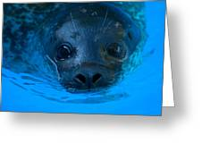 A Harbor Seal At The Lincoln Childrens Greeting Card