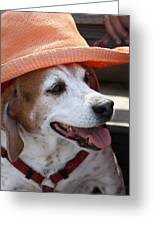 A Hat For Buddy Greeting Card