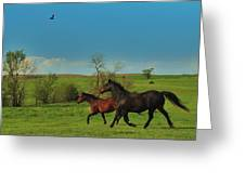 A Hawk And Horses In Kansas Greeting Card