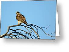 A Hawks Eye View Greeting Card