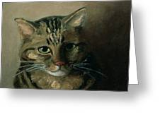 A Head Study Of A Tabby Cat Greeting Card