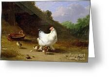 A Hen With Her Chicks Greeting Card