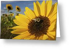 A Honey Bee Visiting A Sunflower Greeting Card by Tim Laman
