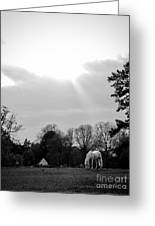 A Horse In Light Greeting Card