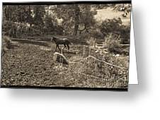 A Horse In The Field Greeting Card