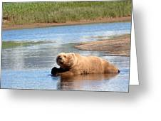A Hot Day In The Hallo Bay Katmai National Park Preserve Greeting Card