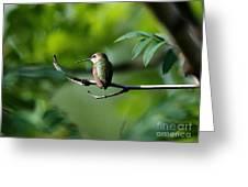 A Hummingbird Rests Greeting Card