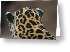 A Jaguar At Omahas Henry Doorly Zoo Greeting Card