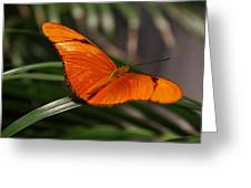 A Julia Butterfly I Greeting Card