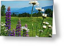 A June Day In Heaven Greeting Card by Kendall McKernon