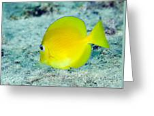 A Juvenile Blue Tang Searching Greeting Card