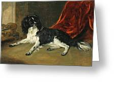 A King Charles Spaniel Greeting Card