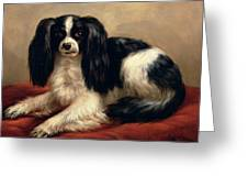 A King Charles Spaniel Seated On A Red Cushion Greeting Card