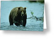 A Kodiak Brown Bear Ursus Middendorfii Greeting Card by George F. Mobley