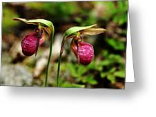 A Lady's Slippers Greeting Card