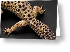 A Leopard Gecko Eublpharis Macularis Greeting Card