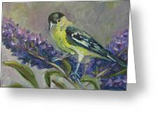 A Lesser Goldfinch Greeting Card