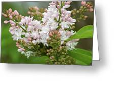 A Lilac Bouquet Greeting Card