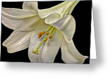 A Lily For Easter Greeting Card