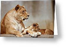A Lioness And Cub Greeting Card