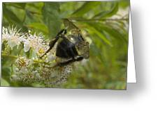 A Little Bee-hind Greeting Card