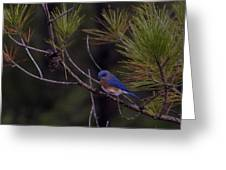 A Little Bluebird Greeting Card