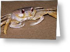 A Little Crabby Greeting Card
