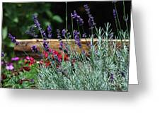 A Little Lavender Greeting Card