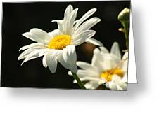 A Little Less Than Perfect Sunshine Daisy  Greeting Card