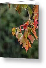 A Little Rain Must Fall Greeting Card