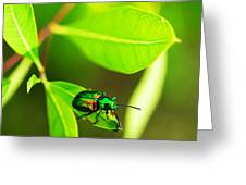 A Little Red Beatle Greeting Card