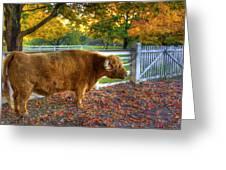 A Little Shaker Bull 2 Greeting Card