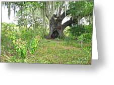 A Live Oak In Purgatory Greeting Card
