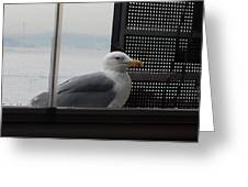 A Looking Seagull Greeting Card