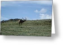 A Lotta Bull Greeting Card
