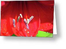 A Macro World Greeting Card