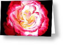 A Magnificent Rose Greeting Card