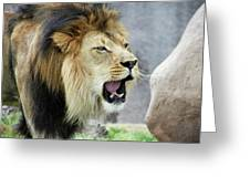 A Male Lion, Panthera Leo, Roaring Loudly Greeting Card